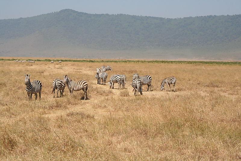 Safari Tanzania 2008202