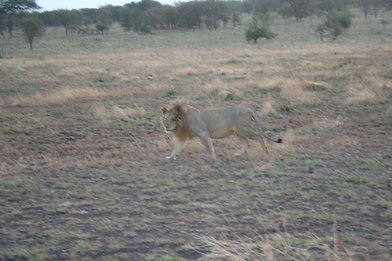 Safari Tanzania 2008036