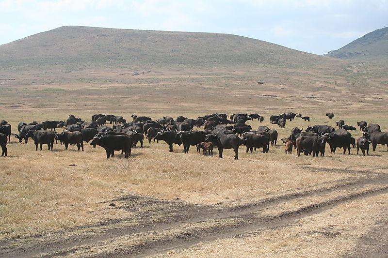 Safari Tanzania 2008225