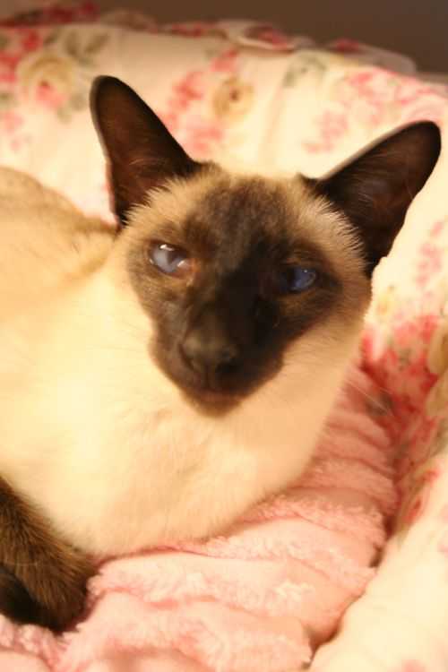 Jo Cat 2006 005